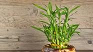 10 cây trồng trong nhà mang lại tài lộc và sức khỏe năm mới