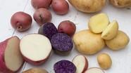 8 thực phẩm phổ biến trong ngày Tết có thể gây ngộ độc
