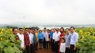 Ban Tuyên huấn tỉnh Xiêng Khoảng (Lào) tham quan cánh đồng hoa hướng dương Nghĩa Đàn