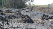 Trạm phó Trạm bảo vệ rừng nhận hối lộ để 15 ha rừng bị phá
