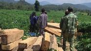 Truy tìm kẻ cướp súng kiểm lâm, mở đường cho xe chở gỗ lậu tẩu thoát