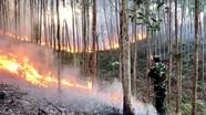Đốt dọn cành lá, một người dân gây cháy gần 168 ha rừng
