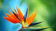 Cảnh giác với 6 loài hoa đẹp ngày Tết nhưng có độc