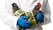 Tiếp nhận 2 ca viêm phổi nặng nghi nhiễm cúm gia cầm AH5N1