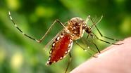 Nghệ An có thêm 3 bệnh nhân mắc sốt xuất huyết