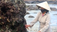 Lạ lùng nghề 'cạo đá lấy rau' kiếm nửa triệu đồng mỗi ngày ở Nghệ An