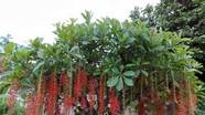 8 loại cây cảnh mang tài lộc vào nhà ngày Tết