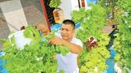 Cách trồng rau sạch bằng phương pháp khí canh mỗi nhà có thể áp dụng