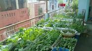 Bí quyết  trộn đất trồng rau sạch trên sân thượng