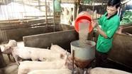 Giá lợn hơi tăng bất thường:  Ai thao túng giá?