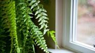 7 cách giúp ngôi nhà mát mẻ hơn trong những ngày nắng nóng