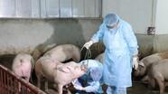 Triệu tập chủ Facebook thời trang tung tin đồn về dịch tả lợn châu Phi