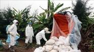 Nam Định là tỉnh thứ 13 trên cả nước phát hiện bệnh dịch tả lợn châu Phi