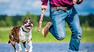 Cách ứng phó và thoát thân khi bị chó tấn công