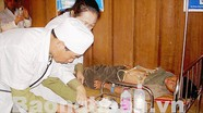 Cứu sống bệnh nhân ăn lá ngón tự tử ở Nghệ An