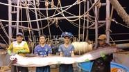 Ngư dân bắt được cá hố khủng dài gần 4m, nặng 80kg