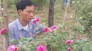 Người đàn ông U40 cầm cố nhà cửa vì mê hoa hồng cổ