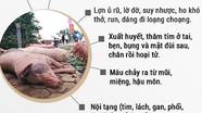 [INFOGRAPHIC] Nhận biết và phòng chống bệnh dịch tả lợn châu Phi