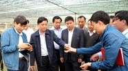 Chủ tịch UBND tỉnh: Đưa cây dược liệu ở Mường Lống thành thế mạnh phát triển