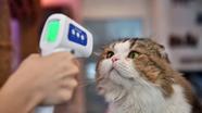 Phát hiện mèo bị nhiễm SARS-CoV-2 từ người, Ấn Độ giàn thiêu đỏ rực suốt ngày đêm