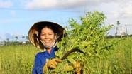 Hội thảo Việt Nam - Hàn Quốc về cây vừng