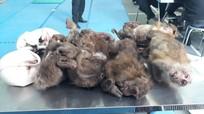 Nghệ An: Bắt quả tang đối tượng vận chuyển trái phép 15 cá thể động vật hoang dã