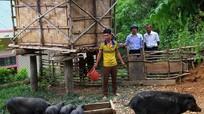 Nghệ An: Dịch tả lợn châu Phi tái bùng phát tại Kỳ Sơn