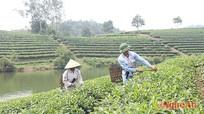 Tiến độ sắp xếp, đổi mới doanh nghiệp tại Nghệ An còn chậm
