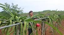 Hướng tới mục tiêu nông dân giàu có, nông thôn văn minh