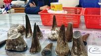 Giấu 7,2kg sừng tê giác trong hộp sữa vận chuyển từ Angola về Việt Nam