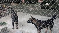 Chủ của đàn chó cắn chết bé trai 7 tuổi có bị xử lý hình sự?