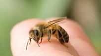 Nghệ An: 4 người vào rừng lấy củi, 1 người bị ong đốt tử vong