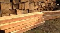 Xử phạt người đàn ông bán hơn 15m3 gỗ lậu