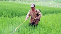 Ngộ độc do không mặc đồ bảo hộ khi phun thuốc diệt cỏ