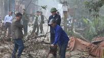 Dân làng giám sát chặt hai cây sưa trăm tỷ ở Hà Nội