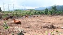 Bộ Công an yêu cầu định giá dự án nuôi bò lớn nhất Hà Tĩnh