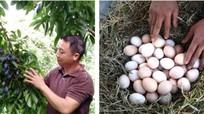 Trứng gà, trám đen, chè xanh và nhiều đặc sản Nghệ An tham gia hội thi phân hạng toàn tỉnh
