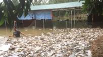 Nam thanh niên Thanh Chương mất trắng vì trại gà ngập lũ được Thủy Tiên - Công Vinh hỗ trợ 115 triệu đồng