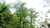 Cử tri Tương Dương kiến nghị cần có giải pháp tăng cường bảo vệ rừng