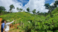 Nghệ An: Nhiều lần hủy hoại rừng, một hộ dân bị chính quyền xã kiến nghị thu hồi đất lâm nghiệp