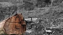 Vụ hủy hoại rừng ở Bắc Sơn (Quỳ Hợp): Phải tiếp tục làm rõ!