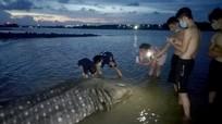 Con cá nặng hơn 1 tấn dạt vào bờ biển Diễn Châu