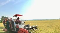 Nghệ An tăng cường máy móc thu hoạch lúa, mỗi hộ chỉ 1 người ra đồng