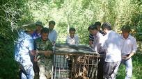 Nhiều thủ đoạn tinh vi của các đối tượng buôn bán động vật hoang dã, quý hiếm