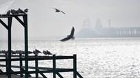 Vụ hỏa hoạn trên tàu ở eo biển Kerch khiến 11 người đã thiệt mạng