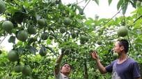 Phân tích kỹ việc kết nối giữa hai yếu tố lao động, việc làm và xóa đói giảm nghèo