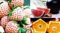 5 loại trái cây có hình thù kỳ lạ giá cực đắt ở Nhật