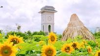 Hai cánh đồng hoa hướng dương tạo 'cơn sốt' ngày hè