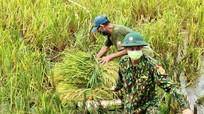 Bộ đội Biên phòng Nghệ An hỗ trợ người dân vùng dịch thu hoạch lúa