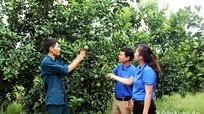 9 dự án xuất sắc lọt vào Chung kết cuộc thi Ý tưởng khởi nghiệp thanh niên nông thôn